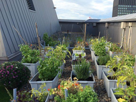 Le jardin du chef